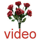 Videos of Chinese roses