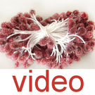 Videos of Fuzzy bulb flowers stamens