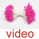 videos fo Fuzzy slim stamens