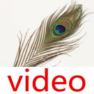 Videos of Feather embellishment