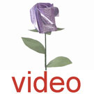 Videos of Single rosebuds